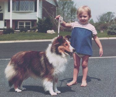 Showing Shetland Sheepdogs